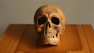 一顆頭骨賣5.5萬!21歲男經營「人骨網拍」引爭議