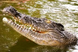 鱷魚吃掉8歲女童 同伴看傻:嘴巴裡有一顆頭