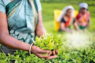 斯里蘭卡有機農業改革失敗 重新進口化肥
