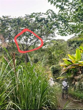 日警紀念碑步道赫見巨大虎頭蜂窩 員警協請摘蜂達人出動