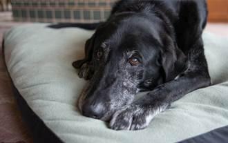 家裡沒人 愛犬狂對空氣吠 項圈突被扯下全場發毛