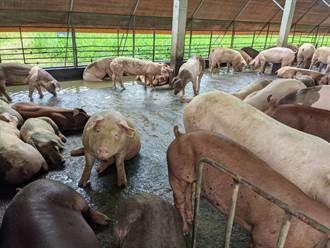 最高補助930萬元 小型養豬場優惠退場即起受理申請