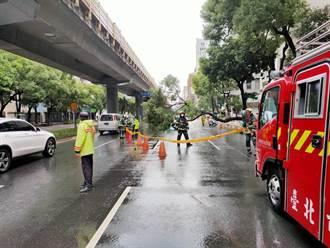 北市20公尺高路樹突倒塌 機車騎士遭重砸2人送醫