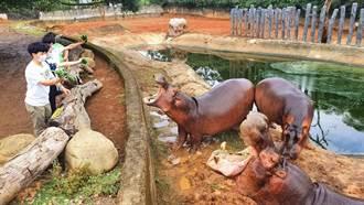 與動物近距離互動夯!全台首創餵食河馬體驗在這裡