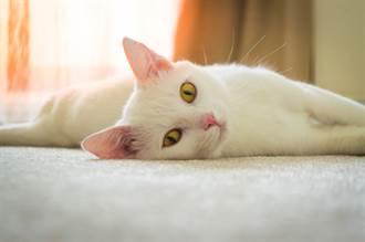 領養小白貓超扯10條件曝光 違約金竟天價!網再爆驚人內幕