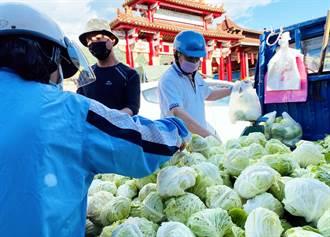 台東逾萬顆「高麗菜寶寶」因雨泡湯 價格砍半賤賣