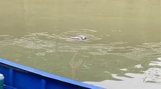 迷路小海豹闖鼻頭漁港 動保處驚「還沒斷奶」:明圍捕安置