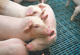 養豬業遭遇最慘週期