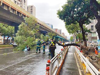 20米路樹突倒塌 重砸騎士2人送醫