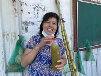嘉義新住民從農事門外漢成為小農 產銷甘蔗養家育子